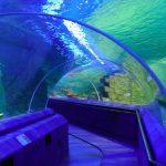 İstanbul Sea Life Akvaryum giriş ücreti ne kadar
