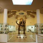 Gaziantep Zooloji ve Doğa Müzesi 23 Nisanda kapılarını açttı