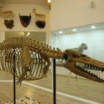 Gaziantep Zooloji ve Doğa Müzesi kapılarını açttı