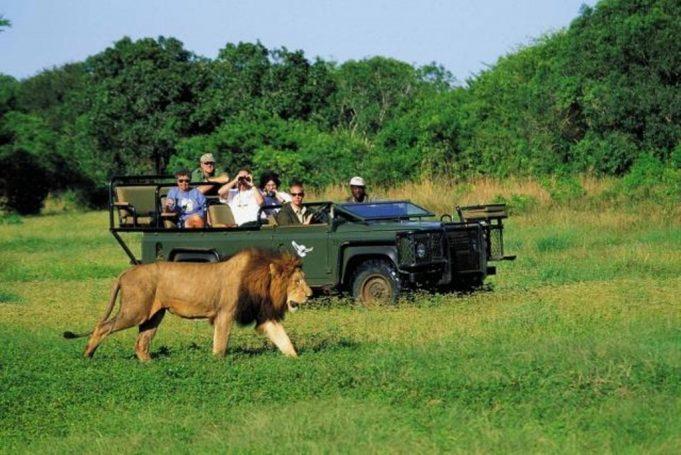 Güney Afrika'da Safari