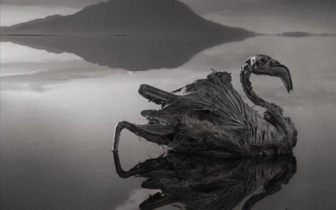 Dokunanı Taşlaştıran Natron Gölü Çarpıtması!