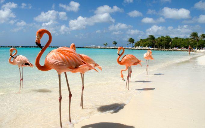 Aruba'da Gezilecek 10 Yer